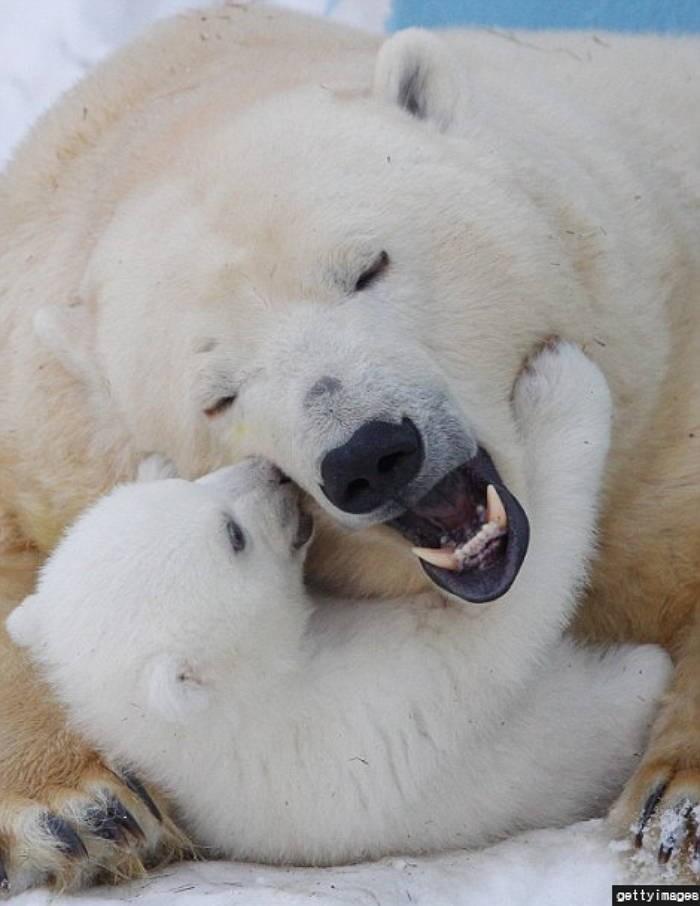북극곰에 대한 이미지 검색결과