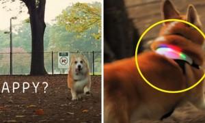 반려견의 감정을 색깔로 알려주는 '무지개 목걸이' (영상)