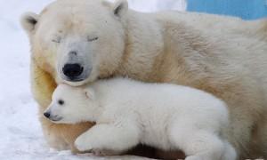 '투발루'와 '북극곰'을 지켜주세요