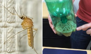 페트병 하나로 '모기' 퇴치하는 방법 (영상)