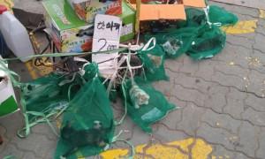 채소망에 '아기 고양이' 넣어 2천원에 파는 경동시장 상인