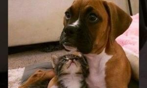 듬직한 '멍멍이' 오빠에게 반한 아기 고양이