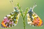 아름다운 '희귀 곤충'의 모습을 순간 포착했다 (사진)