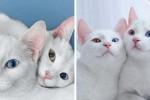 1% 확률로 태어난 '꽃미모' 쌍둥이 고양이