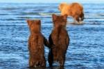두 손 꼭 잡고 사냥 나가는 엄마 배웅하는 곰 형제 (사진)
