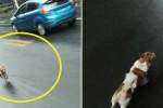 '승차거부'로 혼자 버스 탄 주인 30분간 쫓아간 강아지