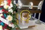 주인 장례식장에 작별 인사하러 스스로 찾아온 멍멍이