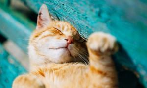 고양이는 어떻게 전 세계를 점령할 수 있었을까?