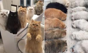 """""""밥 안 주냥"""" 12마리 고양이 키우느라 바쁜 집사"""