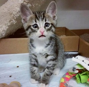 기뻐도 즐거워도 항상 슬픈 눈을 하는 고양이 (사진)
