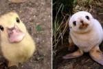 사진작가 바라보며 귀염 '미소' 짓는 아기 동물 (사진 8장)