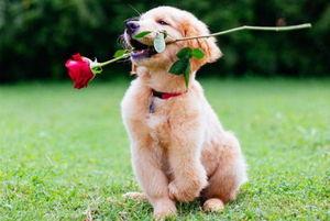 '긍정의 힘'으로 장애 극복하고 SNS 스타된 강아지