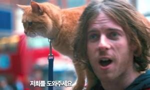 예고편만으로 눈물 나게 만드는 '내 어깨위 고양이, 밥' 영상