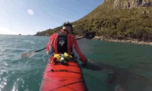 '식인 고래'를 반려동물 처럼 다루는 카약타는 남성 (영상)