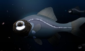 몸에서 '빛' 뿜어 먹이 잡는 자체발광 심해어 (연구)