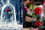 '미녀와 야수' 속 시들지 않는 꽃이 실제로 등장했다