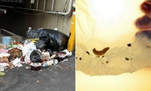 환경 파괴 주범 '비닐봉지' 먹는 애벌레 발견