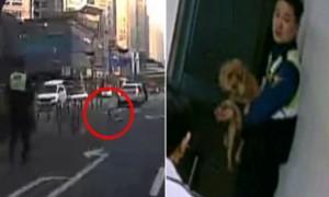 도로 달리는 강아지 로드킬 당할까봐 3km 쫓아가 붙잡은 경찰 (영상)