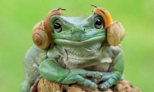 오늘은 '세계 개구리의 날'입니다