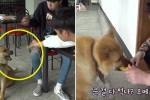 주인에게 버려진뒤 대학생들에게 간식 얻어먹는 '금돼지' (영상)