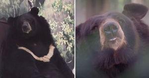 경영난으로 문 닫은 텅 빈 '포천 동물원'서 홀로 빈집 지키는 곰돌이 (영상)