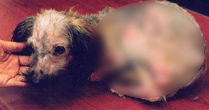 장난삼아 강아지 공중으로 던졌다가 떨어뜨려 죽게 만든 여성