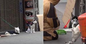 추운 겨울날 길가에 버려진 강아지를 본 시민들의 반응 (영상)