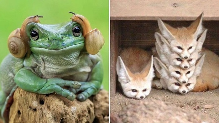 10 Best Perfectly Timed Animal Candid Photos You Won't Believe Were Not  Edited