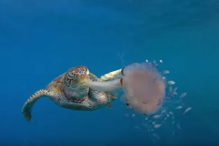 해파리 거북이 이미지 검색결과