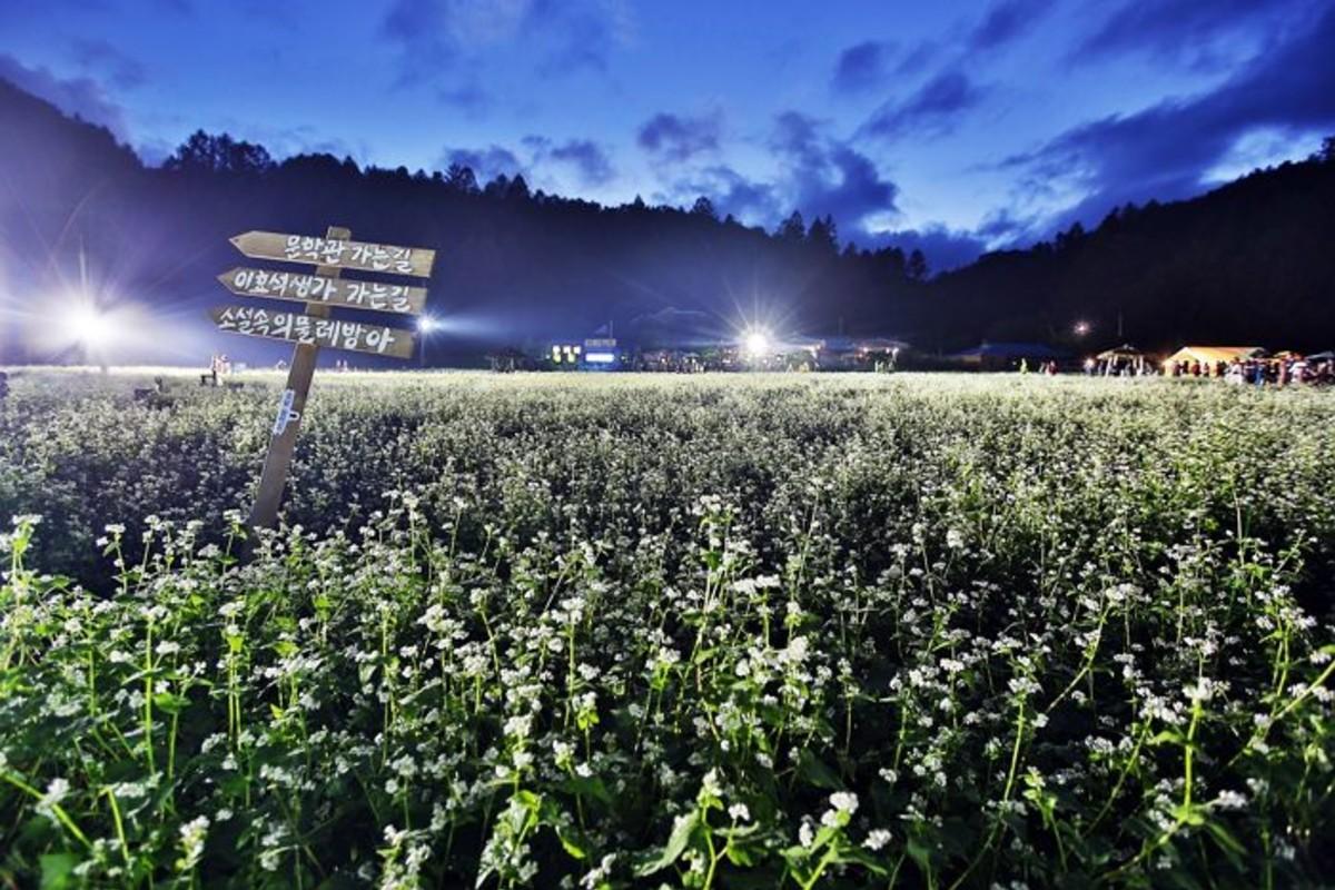 켄싱턴호텔앤리조트, 지역별 꽃축제 연계형 가을 패키지 3종 출시